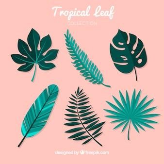 Sammlung von sechs tropischen blättern