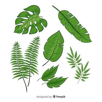 Sammlung von tropischen blättern