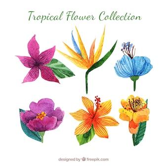 Sammlung von tropischen blumen