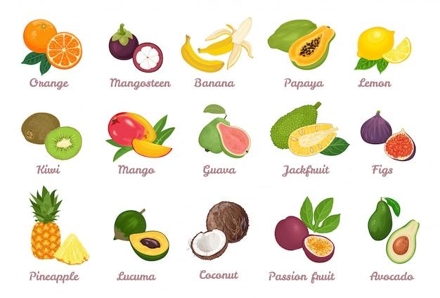 Sammlung von tropischen karikaturfrüchten.