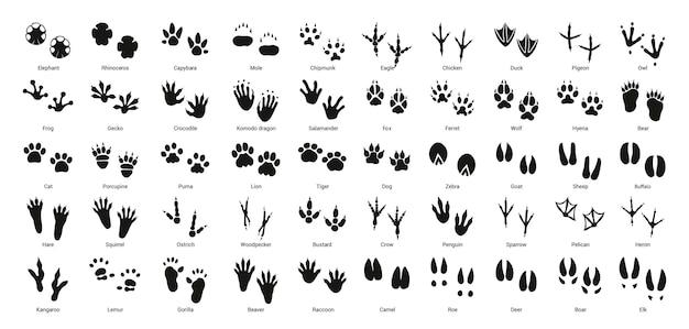 Sammlung von vektorabdrücken von vögeln und tieren.