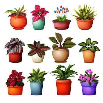 Sammlung von verschiedenen pflanzen grup