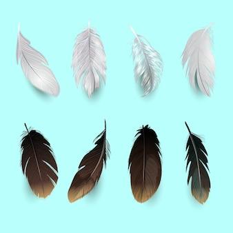 Sammlung von vogelfedern
