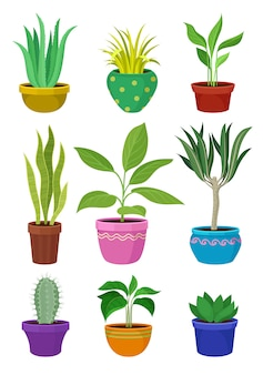 Sammlung von zimmerpflanzen in bunten töpfen.