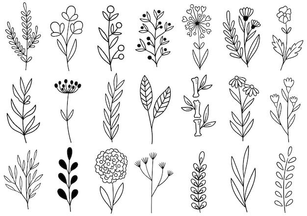 Sammlung wald farn eukalyptus kunst laub natürliche blätter kräuter in linie stil. elegante illustration der dekorativen schönheit für design handgezeichnete blume