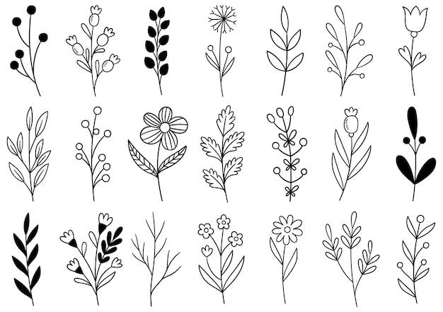 Sammlung wald farn eukalyptus kunst laub natürliche blätter kräuter in linie stil. handgezeichnete blume