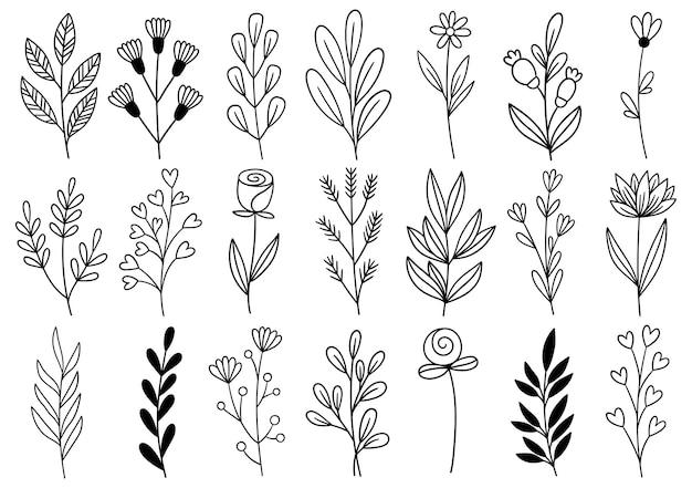 Sammlung waldfarn eukalyptus kunst laub natürliche blätter kräuter im linienstil. elegante illustration der dekorativen schönheit für gezeichnete blume des entwurfs hand