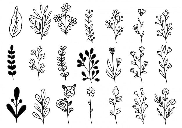 Sammlung waldfarn eukalyptus kunst laub natürliche blätter kräuter in linie stil. elegante illustration der dekorativen schönheit für design handgezeichnete blume