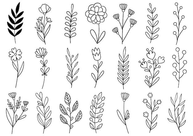 Sammlung waldfarn eukalyptus kunst laub natürliche blätter kräuter in linie stil. elegante illustration der dekorativen schönheit für handgezeichnete blume des entwurfs