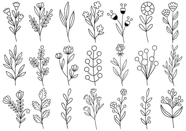Sammlung waldfarn eukalyptus kunst laub natürliche blätter kräuter in linie stil. handgezeichnete blume