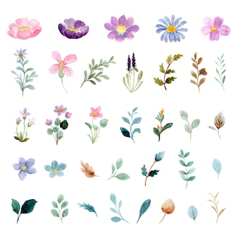 Sammlung wilder blumenelemente des aquarells