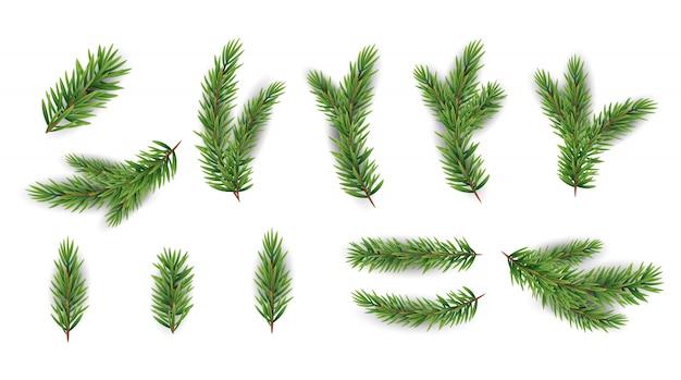 Sammlungssatz realistische tannenzweige für weihnachtsbaum, kiefer