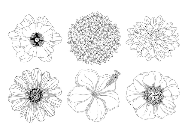 Sammlungssatz von sommerblumen. mohn, hortensie, dahlie, pfingstrose, hibiskus, asterknospen.