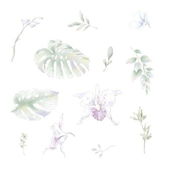 Satz aquarellblumenorchideen, aquarellillustration lokalisiert