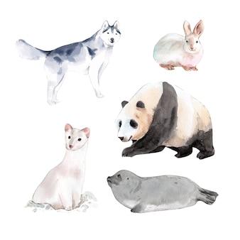Satz aquarelldesignkaninchen, panda, hermelinillustration von.