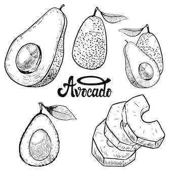Satz avocadoillustrationen auf weißem hintergrund. elemente für logo, etikett, emblem, zeichen, poster, menü. illustration.