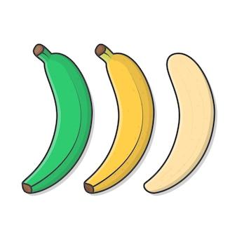 Satz bananenillustration. bananenreife stufen flach