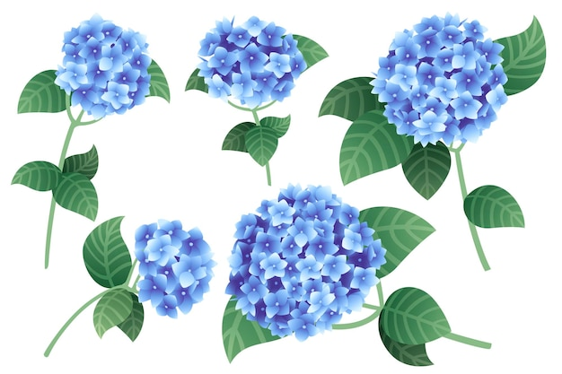 Satz blaue hortensienblumen mit grünen stielen und blättern, flache vektorgrafiken