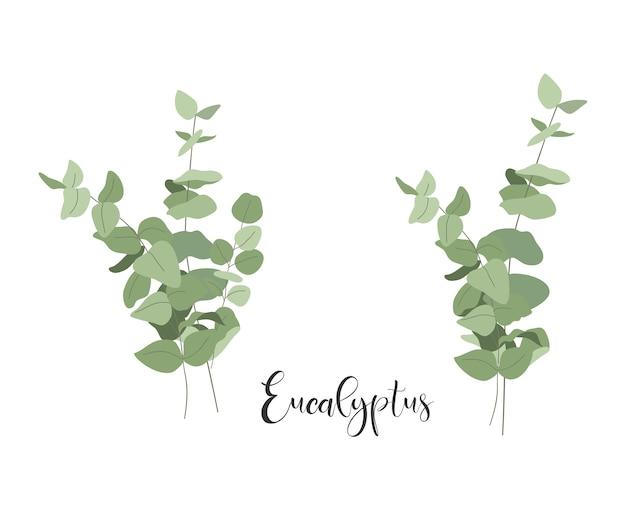 Satz blumensträuße aus eukalyptus.