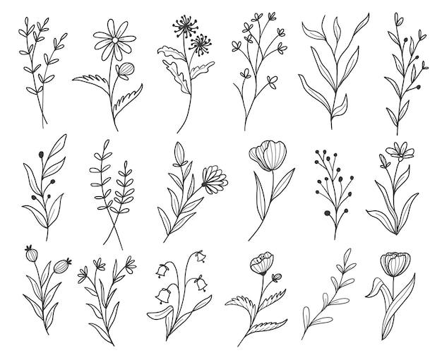 Satz botanische blattgekritzel-wildblumen-linienkunst