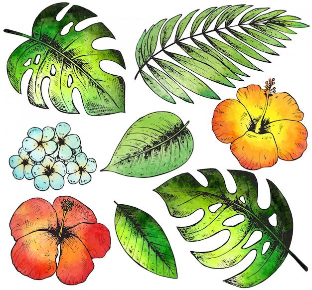 Satz bunte hand gezeichnete tropische pflanzen und blumen