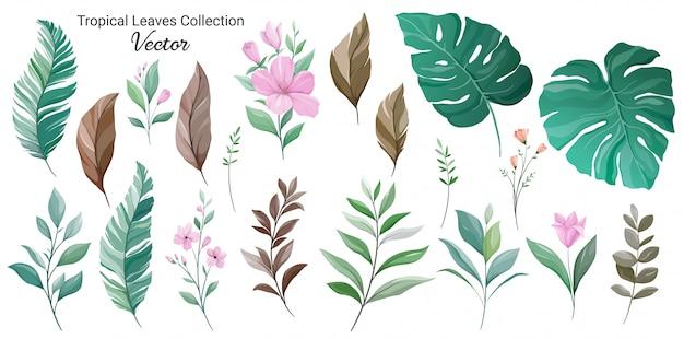 Satz des exotischen blattelementvektors. blumenabbildung der monstera, der palme, des hibiscus und der wilden blumen