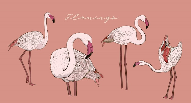 Satz des flamingos, skizzenvektor des handabgehobenen betrages.