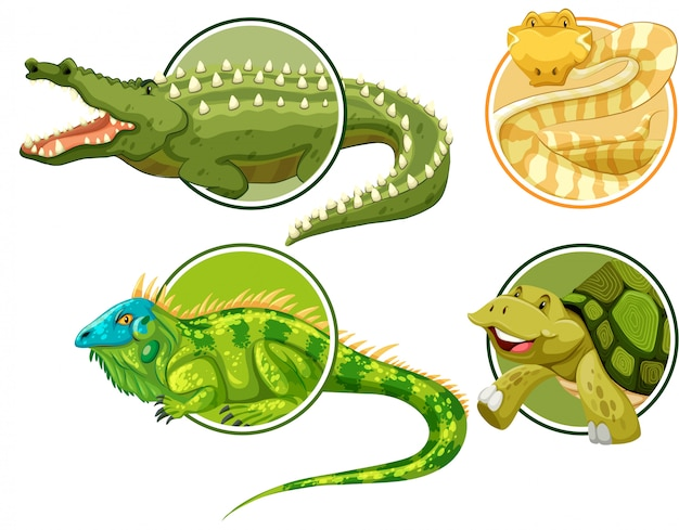 Satz des reptils auf kreisaufkleberschablone