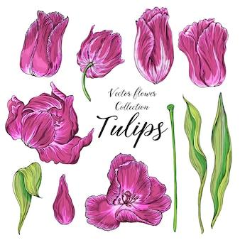 Satz des vektors färbte tulpenblumen, frühlingsblumen