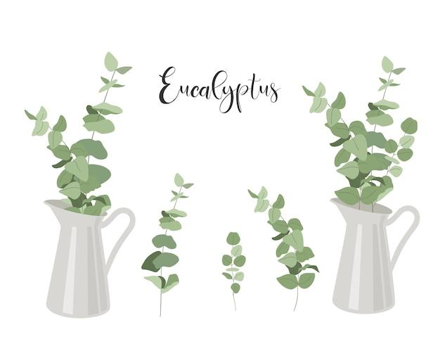 Satz eukalyptus. zweige mit blättern im krug.