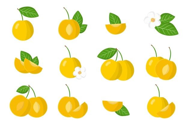 Satz exotische früchte der kirschpflaume lokalisiert auf weiß