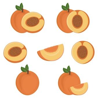Satz fruchtpfirsichhälften mit einem stein, farbe lokalisierte vektorillustration