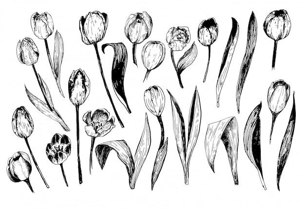 Satz frühlingsblumen tulpenzweige. tintenskizze sammlung von illustrationen