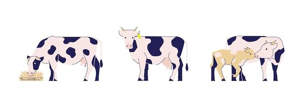 Satz gefleckte kühe auf weißem hintergrund