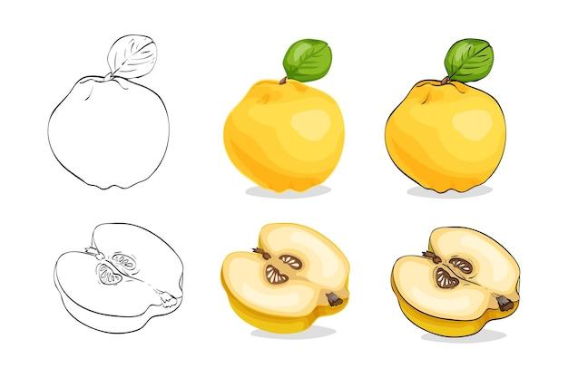Satz gelbe quitte mit blättern lokalisiert auf weiß