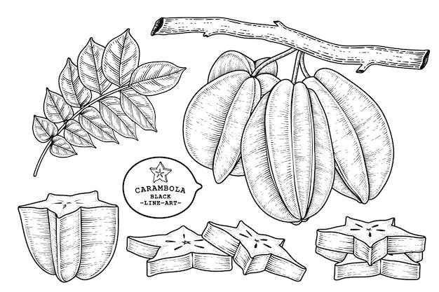 Satz gezeichnete elemente der sternfrucht- oder carambola-fruchthand gezeichnete elemente
