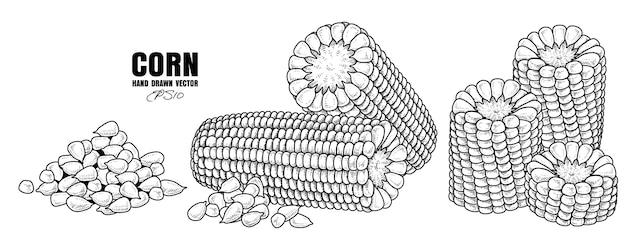Satz gezeichnete skizzenillustration des reifen mais hand