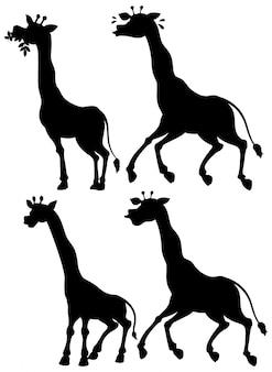 Satz giraffe und seine silhouette