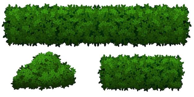 Satz grüne büsche und kräuter verschiedener formen lokalisiert auf weißem hintergrund