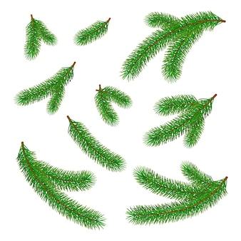Satz grüne tannenzweige
