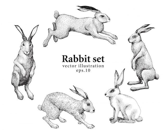 Satz hand gezeichnete kaninchenillustrationen lokalisiert auf weißem hintergrund. retro vintage illustration.
