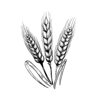 Satz hand gezeichnete weizenillustration im gravurstil. elemente für plakat, emblem, zeichen, etikett. illustration