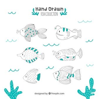 Satz hand gezeichneter fisch