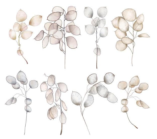 Satz handgezeichnete lunaria rediviva zweige isolierte illustration auf weißem hintergrund