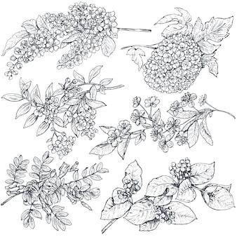 Satz handgezeichnete tintenskizze frühlingszweige pflanzen mit blättern und blumen