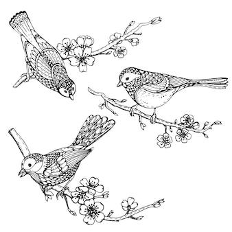 Satz handgezeichnete verzierte vögel auf sakura-blumenzweigen.