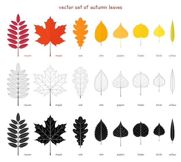 Satz herbstblätter. flache elemente eines anderen baumes. eberesche, ahorn, eiche und ulme. pappel, birke, amerikanische linde und weide.