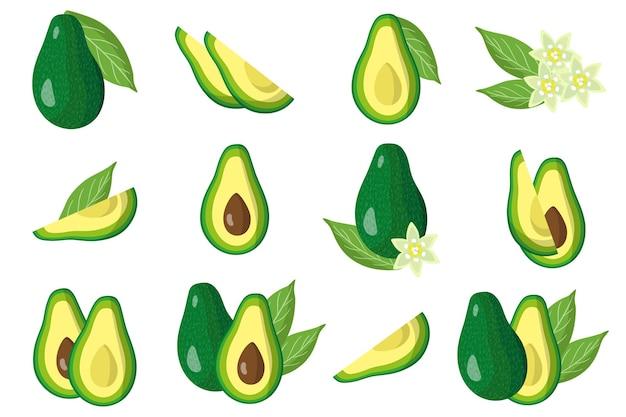 Satz illustrationen mit exotischen früchten, blumen und blättern der avocado lokalisiert auf einem weißen hintergrund. isolierte symbole festgelegt.
