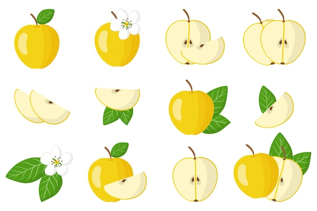 Satz illustrationen mit exotischen früchten, blumen und blättern des gelben apfels lokalisiert auf einem weißen hintergrund. isolierte symbole festgelegt.