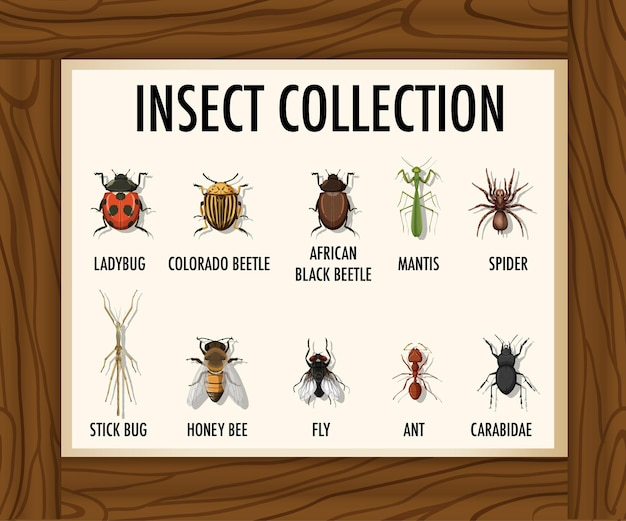 Satz insektensammlung auf holztisch